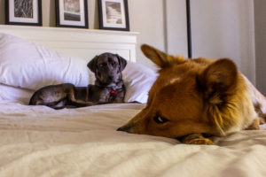 """Great dog pics can happen anytime, anywhere. Grab your camera and see if you can capture what's really happening in the room... (as in, """"Steve, I'm a little tired of the relentless cuteness. A little help, here? Please?"""""""