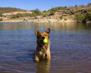 """Chinle doesn't like fetch. She does, however, like to tease you... as in, """"I have the ball and you don't want to get your shoes wet. I win."""""""