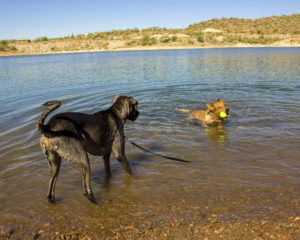 "Chinle says to Willow, ""My lake, my ball."" She's right, too."