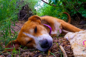 Nap time for Edgar still means a quiet place in the bushes where a predator couldn't sneak up on him. This is the sleep of the just...
