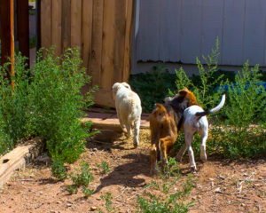 Edgar and his buddies take a break from playing and head out front to... play some more.