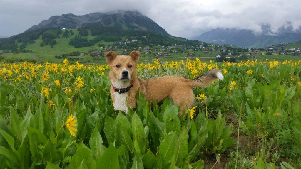 Colorado Animal Rescue | Adopt a Puppy | RezDawg Rescue