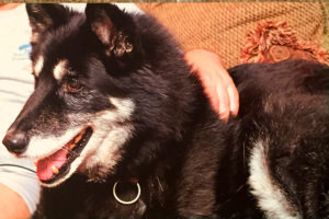 Oso was adopted as a senior dog who lost his home. His last nine months were filled with fantastic fun and unconditional love.