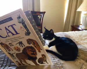 Now that Puma is operating at peak efficiency, she's considering going back to school... but first a little brushing up on her ancestry.