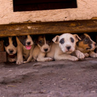 Gearing Up for Puppy and Kitten Season by Steven Sable