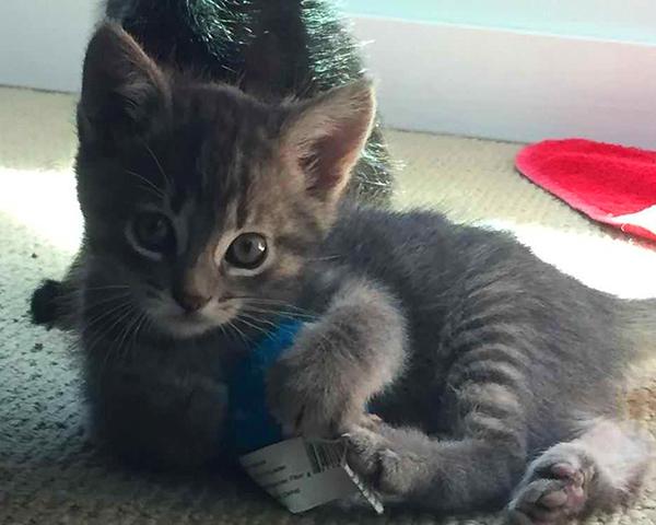 Grant Application Cat Rescue
